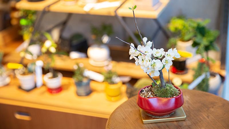 mini-bonsai.life